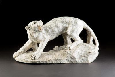 Brüllender Puma